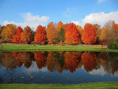 Trees in Fall color with reflection in lake