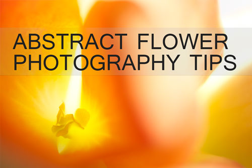 Abstract flower photography tips