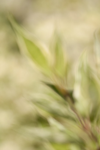Out of focus painterly abstract photo of leaves