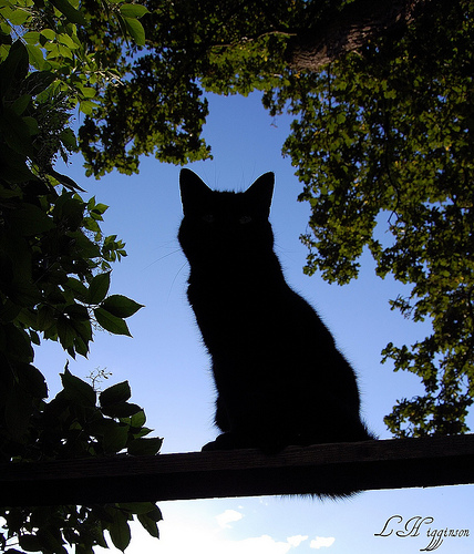 the silhouette cat framed by tree leaves