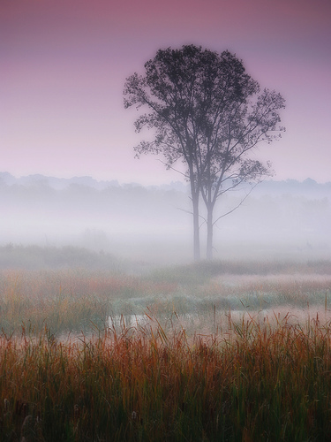 Misty autumn dawn - Lonely trees lost in a foggy meadow