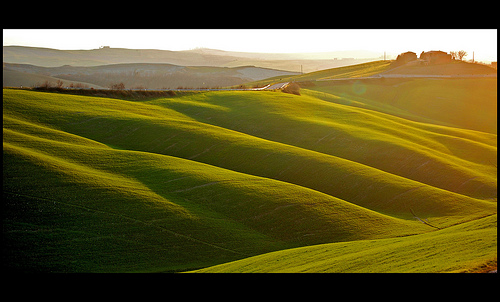 Warm low sunset light bringing out the texture and form of green rolling hills