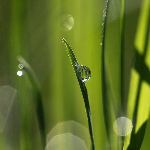 Water drop on grass macro photo