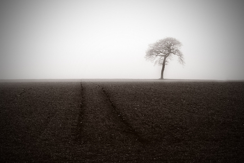 Misty Morning - landscape photo with a simple minimalistic composition