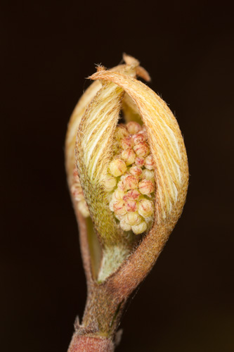 Plant bud photo
