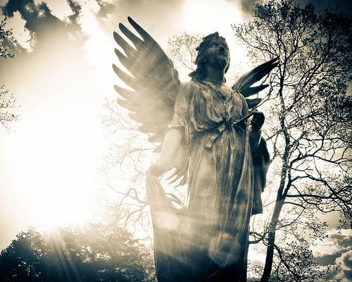 Angel - 365 8-5-2011