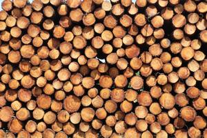 Pattern photo by Joost J. Bakker IJmuiden: Wood