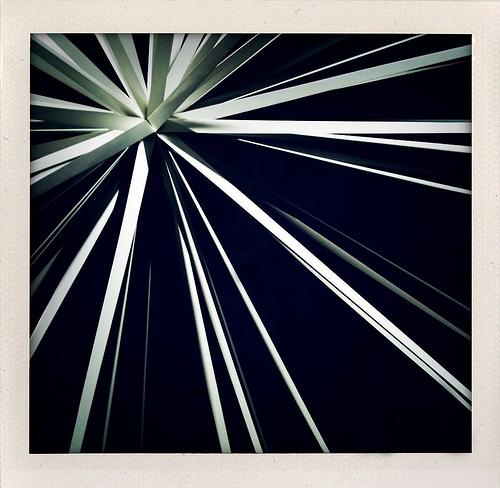 Windseed
