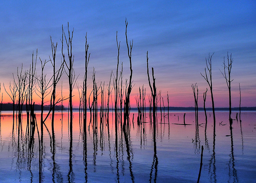 Manasquan Reservoir - trees in the water captured as silhouettes in the morning twilight