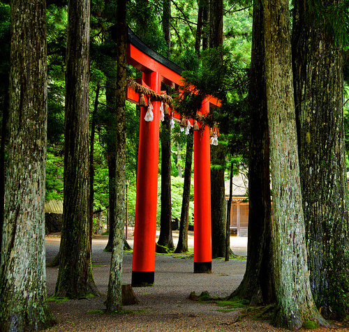 Koyasan 高野山 (Wakayama/Japan) bright colored torii amongst trees