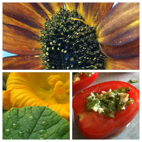 Garden Triptych photo project