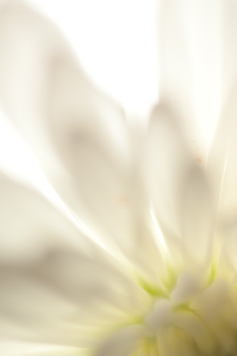 Macro abstract photo of a backlit flower
