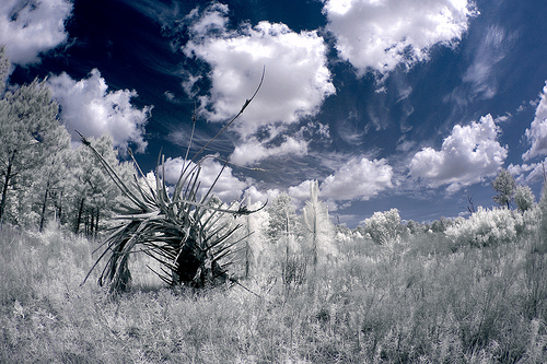 Fluffy clouds against a blue sky, great for infrared photography