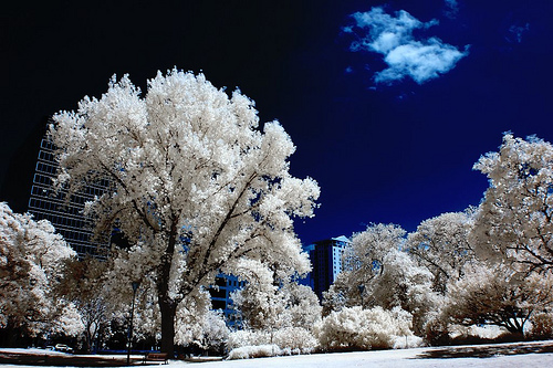summertime blues infrared image