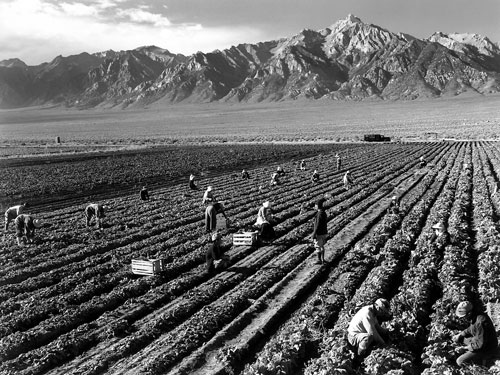 Farm, farm workers, Mt. Williamson in background, Manzanar Relocation Center, California by Ansel Adams 1943