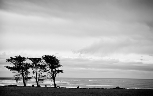 B&w tree silhouettes - example of using tonal contrast