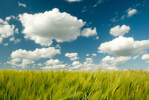 Clouds photographed with a polarizing filter used