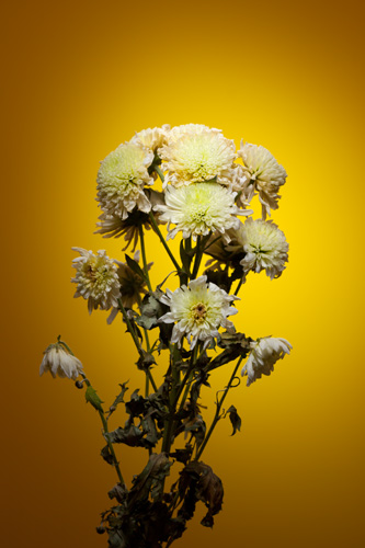 Light painting flower photo - yellow flowers with yellow background