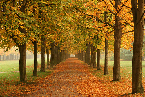 Converging lines of trees in Fall