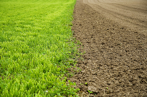 Color contrast - A green field of grass next to a brown ploughed field