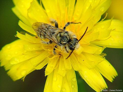 A wet bee