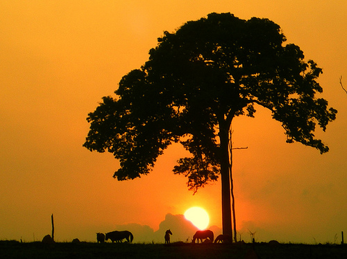 Silhouettes of a large tree with animals below it at sunrise