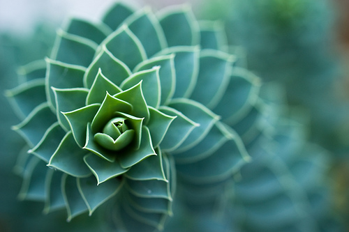 Bokeh Spiral - plant photo captured using a macro lens