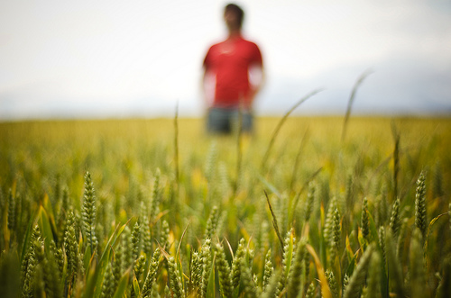 Photo of person in wheat field with the person out of focus, shallow depth of field from using a large aperture lens