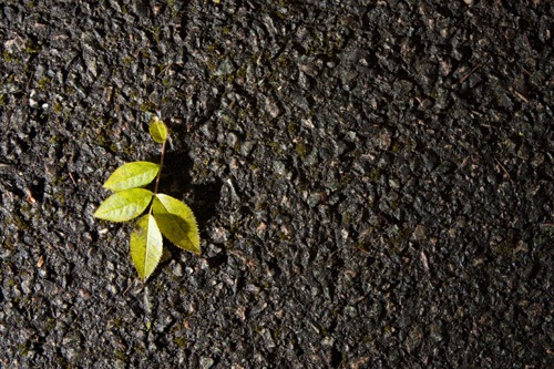 Photo of leaf on pavement lit from an angle