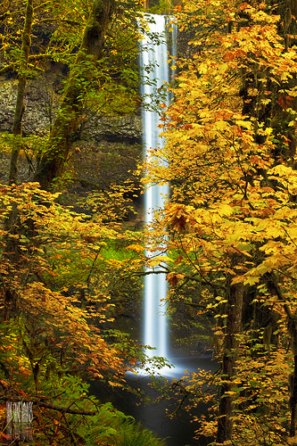Yellow fall leaves and waterfall
