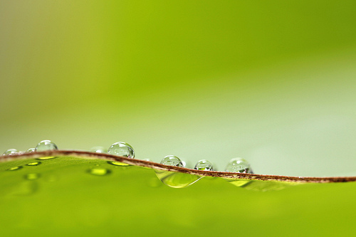 wave - waterdrops on the edge of a leaf, photographed using a reasonably large aperture for a close-up photo (f/5), to put the background well out of focus and create a soft look