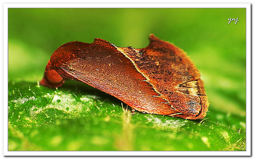 Moth photograph - focus stack of two manually focused photos