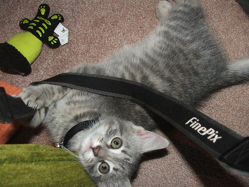 Cat pulling on camera strap