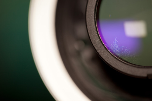 Small white strands of fungus in a lens