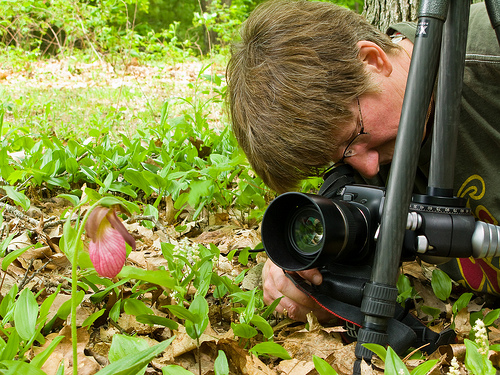 Ellen shoots the pink lady's slipper