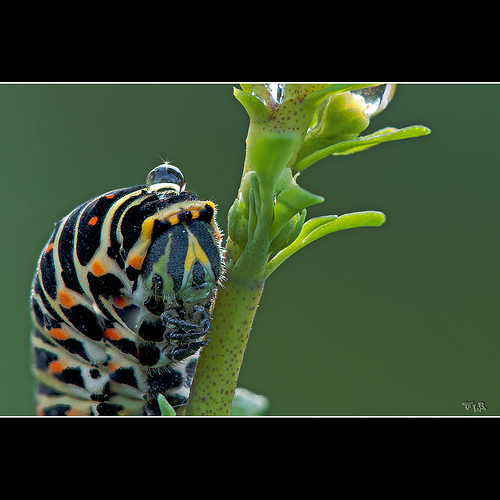 the last caterpillar 2010