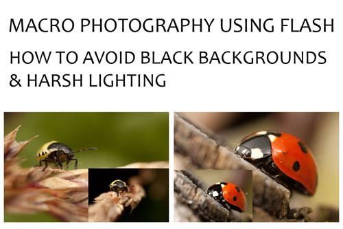 Macro Photography Using Flash – How To Avoid Black Backgrounds & Harsh Lighting