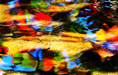 Abstract photo of colorful leaves reflected in moving water