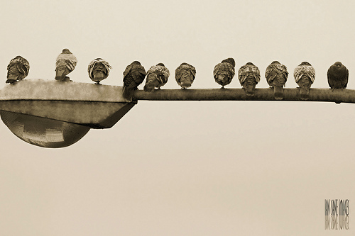 Watermarked photo of a row of pigeons sitting on a lamppost
