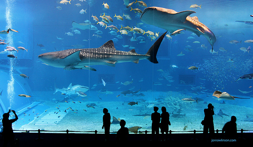 Tips For Photographing Fish In An Aquarium Discover Digital