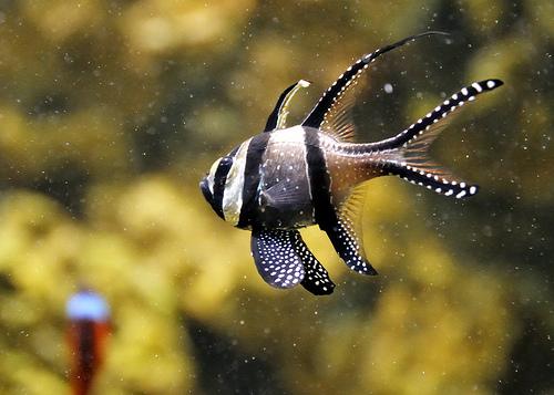New Port Aquarium - Cincinnati, white balance corrected