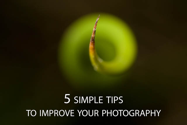 5 Simple Tips to Improve your Photography