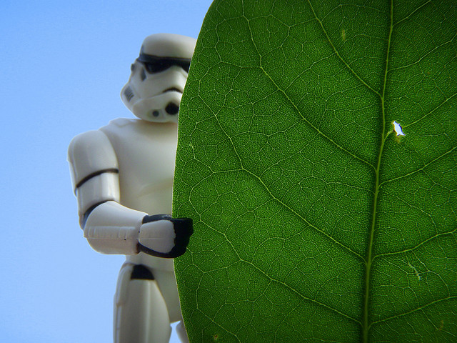 Leaf No Man Behind - a Storm Trooper action figure with a leaf