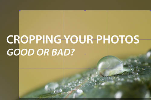 Cropping your photos - Good or Bad?