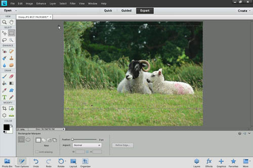 Making a selection to crop using the rectangular marquee tool in Photoshop Elements