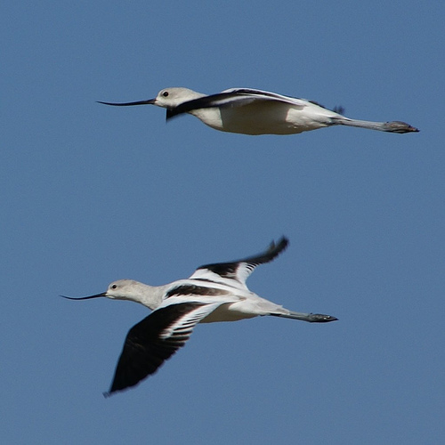 Birds Flying - cropped photo
