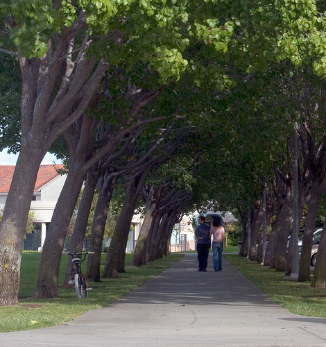 Photo of a couple walking down a tree lined pathway, cropped in Photoshop to improve the composition