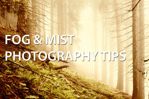 Fog & Mist Photography Tips