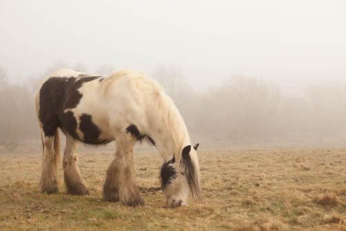 Photo taken in fog using auto exposure with +1.3EV exposure compensation