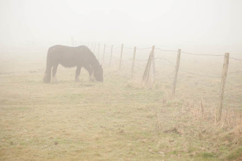 Photo of a horse taken from some distance away using a long focal length (100mm) lens